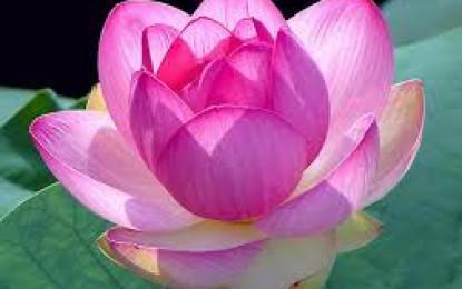 Lời Phật Dạy về đạo làm người (Kinh Thiện Sanh)