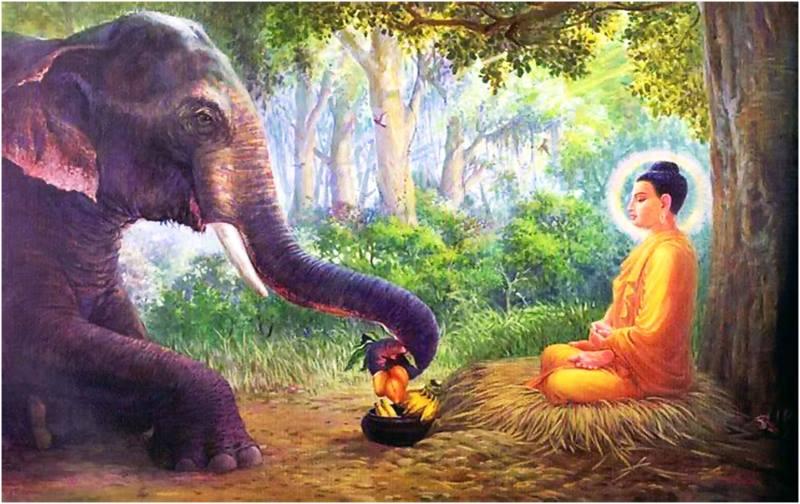 Album Cuộc đời Đức Phật Thích Ca Mâu Ni 88