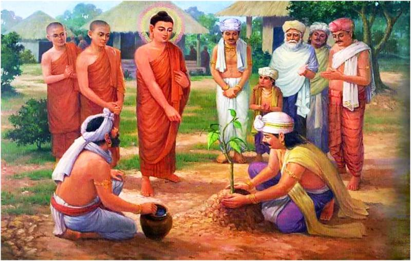 Album Cuộc đời Đức Phật Thích Ca Mâu Ni 80