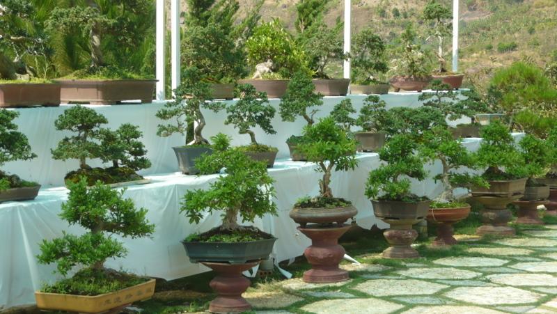 Vườn bonsai